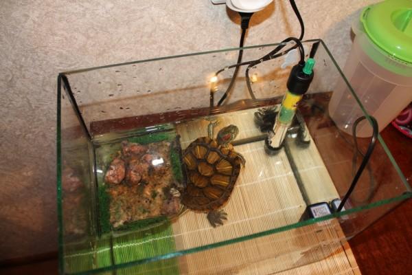 Фильтры для черепах красноухих цена